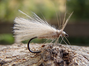 CDC Cream  Sedge