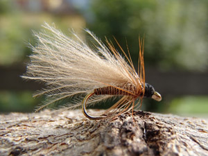 CDC Quill  Sedge