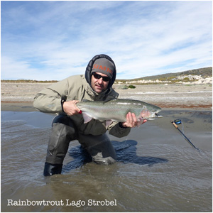 Rainbow trout South America